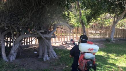 Realizan labores de fumigación contra el dengue en Vivero Forestal