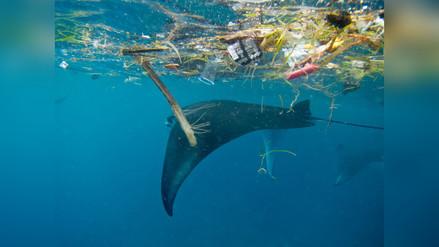 Los microplásticos podrían acabar con ballenas, rayas y tiburones