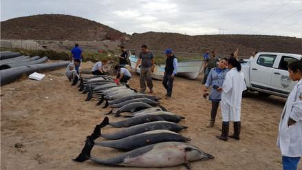 20 delfines murieron tras quedar varados en una playa de México