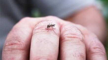 Recomendaciones para evitar el contagio de dengue y zika
