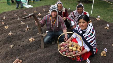 El Minagri estableció los lineamientos para la compra de papa a productores