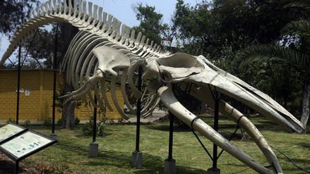 Museo de Historia Natural celebra 100 años y abre su colección al público