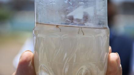 Chiclayo: Encuentran larvas de dengue en el Terminal Terrestre de Epsel