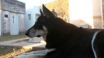Murió 'Capitán', el perro argentino que visitó la tumba de su dueño por casi 11 años
