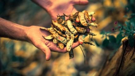 Milpuj La Heredad, una esperanza para los bosques secos del Perú