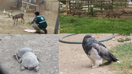 Rescatan a venados, tortugas y águilas de centros recreativos