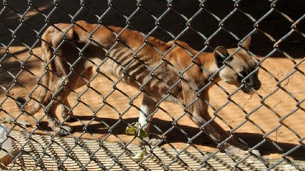 Animales mueren en zoológico de Venezuela por falta de comida