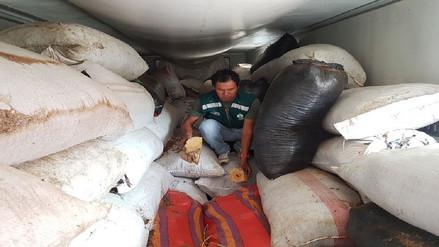 Chiclayo: decomisan más de tres toneladas de palo santo trasladados de manera ilegal