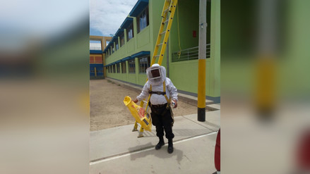 Chiclayo: retiran panal de abejas de colegio Karl Weiss