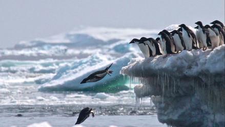 Descubren una colonia de más de un millón y medio de pingüinos en la Antártida
