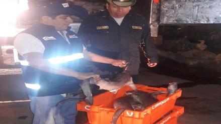 Decomisan más de mil kilos de tiburón martillo que se encuentra en veda