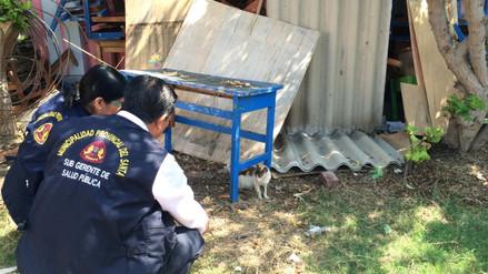 Ejecutan plan para atrapar a gatos que invadieron colegio de Chimbote
