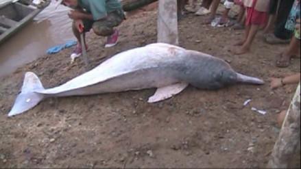 Loreto: un delfín rosado fue hallado muerto en el río Huallaga