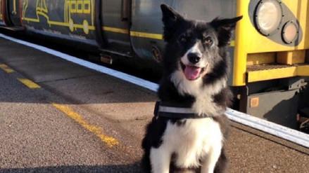 Premiado un perro policía por su heroica actuación en el atentado de Manchester