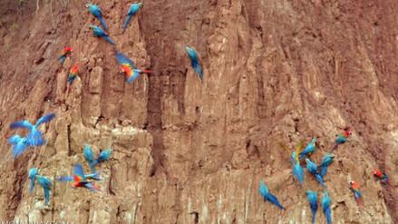 Galería: 15 espectaculares fotos de Tambopata
