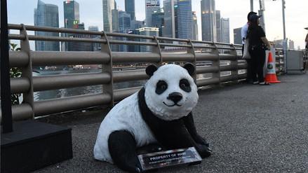 Hora del Planeta | Lo que puedes hacer un tu vida diaria para salvar el medio ambiente
