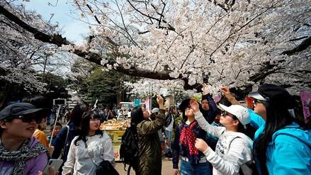Fotos | Las flores de cerezo tiñen de rosa a Tokio