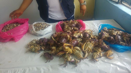 Decomisan más de 100 kilos de productos marinos en mercados de Chiclayo