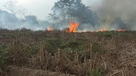 Incendio forestal afectó 40 hectáreas de cobertura natural en Salas