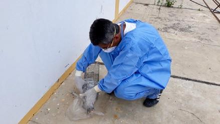 Salud empezó vigilancia por peste en distrito de Oyotún