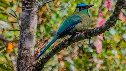 Una de cada ocho especies de aves del planeta está en peligro de extinción
