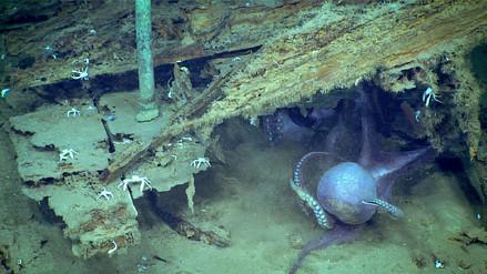 Dos pulpos fueron grabados peleando en las profundidades del Golfo de México