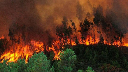 Dos bomberos fallecieron por incendio forestal en Honduras