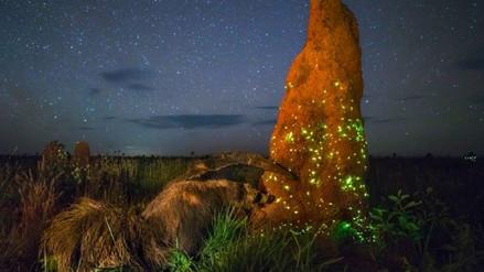 Fotografía premiada sobre la vida salvaje mostraba a un animal disecado