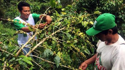 ACR Urusayhua: Machiguengas lideran conservación frente al narcoterrorismo