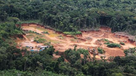 Reforestarán Amazonía con 155 mil árboles en zonas de minería ilegal