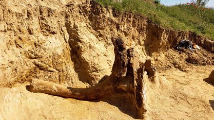 Encuentran restos de un elefante prehistórico previo al mamut en Macedonia