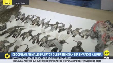 El Minagri decomisó 84 animales muertos que iban a ser llevados ilegalmente a Rusia