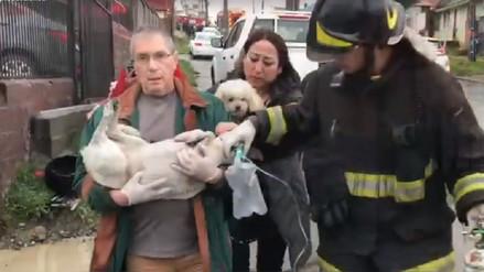 Video | Un perro fue reanimado con primeros auxilios tras ser salvado de un incendio en Chile