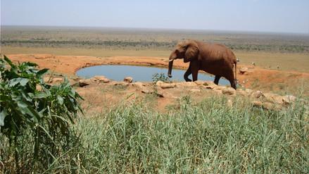 Un estudio muestra la usurpación humana de áreas protegidas del planeta
