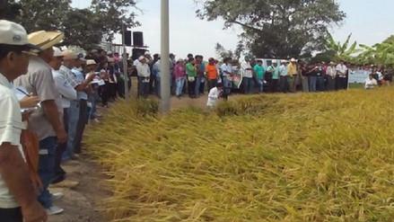 Productores piden restricciones a importación de arroz de baja calidad