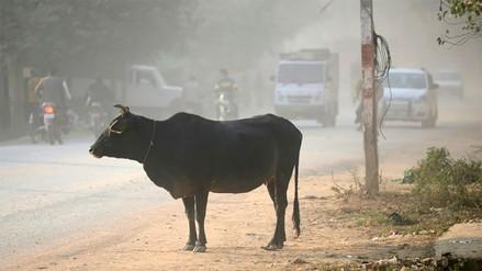 India | Matan a golpes a musulmán sospechoso de matar una vaca