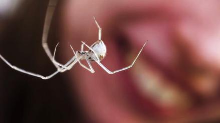 Especialistas aconsejan remover las arañas caseras en la limpieza semanal