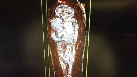 Una antigua momia de halcón resultó ser un feto humano con deformaciones