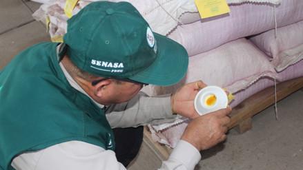 Instalan trampas para evitar plaga del gorgojo Khapra en Lambayeque