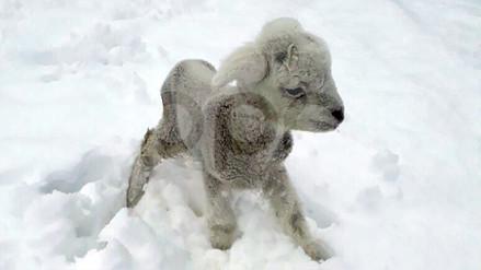 Fuertes nevadas se registraron en las zonas altas de Puno