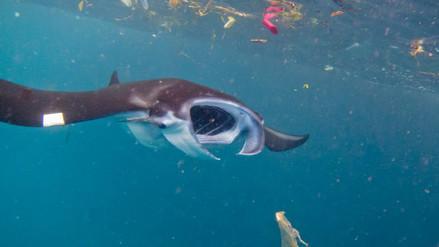 Día mundial del Medio Ambiente: los plásticos están acabando con la vida marina
