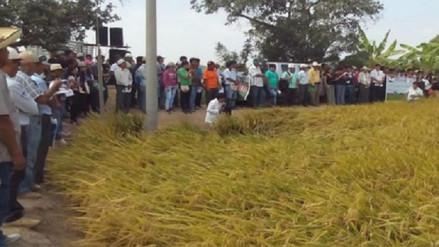 No puede impedir la importación de arroz indica gerente de Agricultura