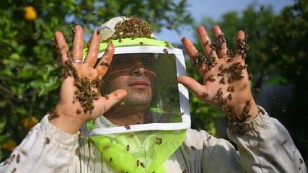 Ataque de abejas en acto público de Álvaro Uribe en Colombia deja 15 heridos