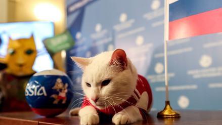 Inauguración Mundial: El gato Aquiles predice la victoria de Rusia
