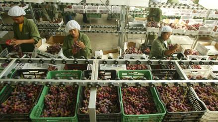 Comisión del Congreso aprobó prorrogar la Ley de Promoción Agraria hasta el 2031