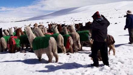 Alcalde del distrito de Capaso denunció que el Gobierno no los incluyó en estado de Emergencia por heladas