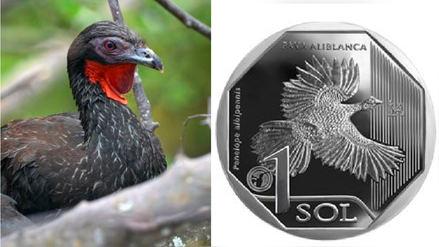 BCR emite nueva moneda de S/1 alusiva a la Pava Aliblanca