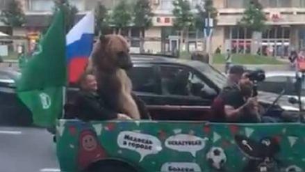 Un oso apareció en las calles de Moscú tras el inicio del Mundial