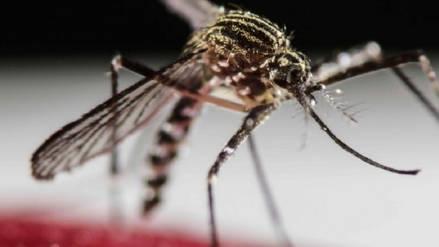 Niña de 4 años es la primera víctima mortal de dengue hemorrágico en Honduras