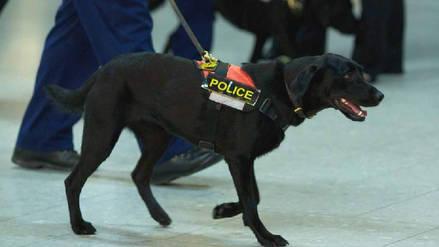 El Reino Unido endurecerá los castigos por atacar a perros policía